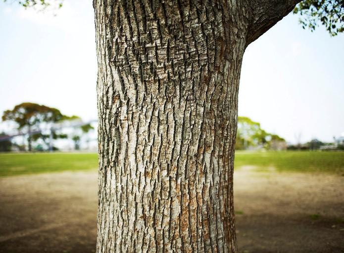 Construire pour l avenir maison bois et eco construction - Avenir maison ...
